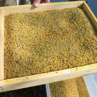 Sundance Pollentrap - Pollenfälla